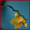 Anna S.: flower