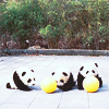 Панды-няшечки