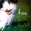 kitty hee