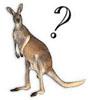 kangaroo... or KANGAJEW?