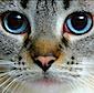 chibis userpic