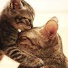 layla_aaron: Kitteh Luv 1