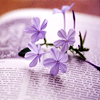 Purple Flower Book - colorvary