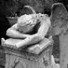 #!/usr/bin/girl: weeping angel