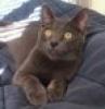 catsofblue userpic