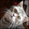 1anna userpic