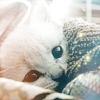 snuggly kitten