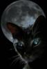 luna del gato