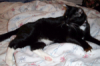 glinda_w: Hannahcat_on_bed