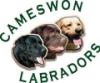 labrador, cameswon