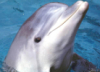 grey_dolphin userpic
