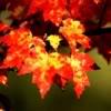 leaf_light: autumn glow