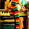 M: Stock : rainbow socks