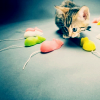 animals: kittens and mice