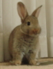 bunnyhop143 userpic