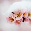 thesingingbowl userpic