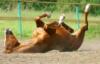 лошадко валяеццо
