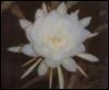 amaralau userpic