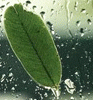 lusva userpic