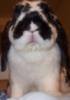 hasty_smurf userpic