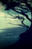 lovelywalrus userpic