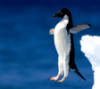 Пингвин в полете
