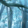 blue_forest
