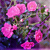 hllx3 userpic