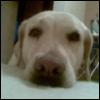 sveta_svetlaya: Собак