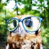 i am a cute owl