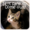 *Kitten Safe To Come Out