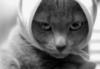 mr_alvito userpic