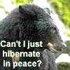 Malterre: bear