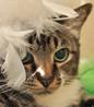 twinncy userpic