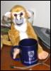 amirasquirrel userpic