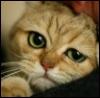 arafelkai userpic