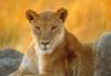 lioness113 userpic