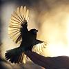 Stock - Bird
