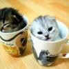 savagelee: kitties