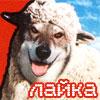 montemsk