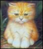 рыжий котик