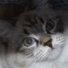 кошкина морда