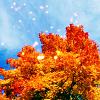 aurorashine userpic