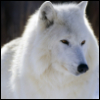 1_with_wolf userpic