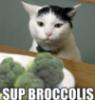 Sup Broccolis