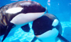 orca_lover userpic