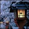 Sakura Light