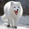 cool_polar_fox
