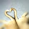Kori: Stock/Husky!Hearts