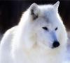ir_bear_cub userpic